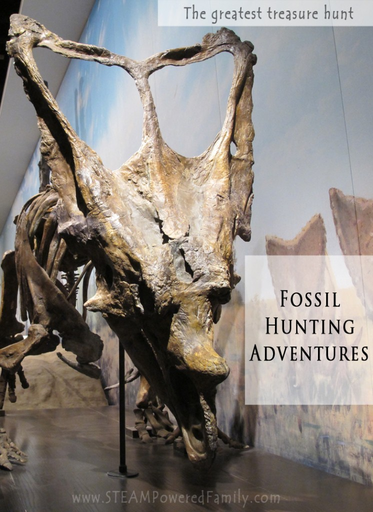 Fossil Hunting Adventures - The greatest treasure hunt and fun for the whole family