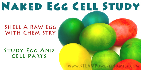 Naked Egg Cell Unit Study - Learn about cells and eggs in this cool experiment involving permeability, cell structures, chemistry and more.