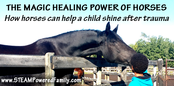 Healing Horses and Childhood Trauma – How horses can help a child shine after trauma