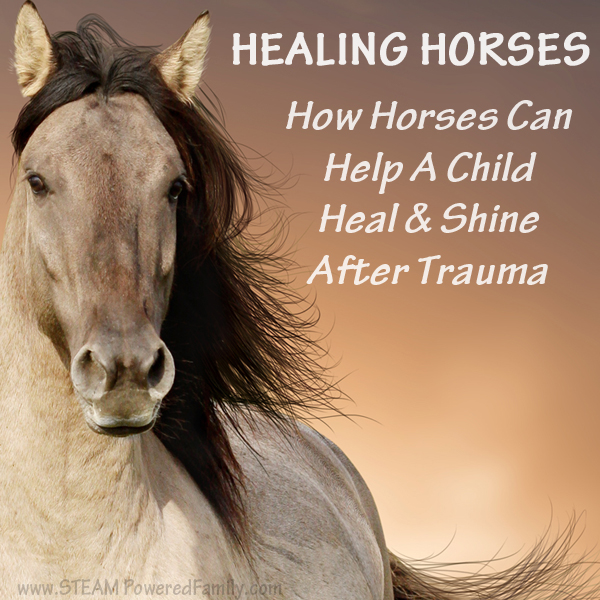 Healing Horses - The magical power of horses to help child heal is amazing. My own son's history with childhood trauma left him with severe issues. It was horses that finally helped him find healing.