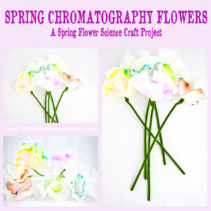 Spring Flowers Chromatography Project is a science inspired arts and crafts project that teaches color theory and the results are beautiful flowers.