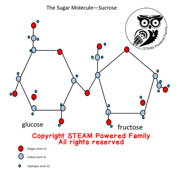 Candy Science Sucrose Molecule Copyright STEAM Powered Family. All Rights Reserved. All copying prohibited.