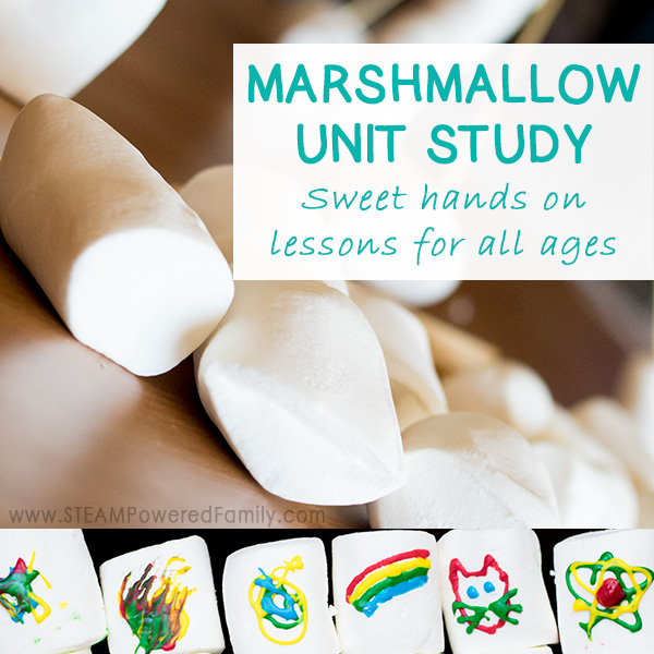 Marshmallows are a fantastic unit study with lessons in science, engineering, math and so much more. Dive into some extra tasty kitchen science by making your own homemade marshmallows (so much better than store bought), and even some sensory play.