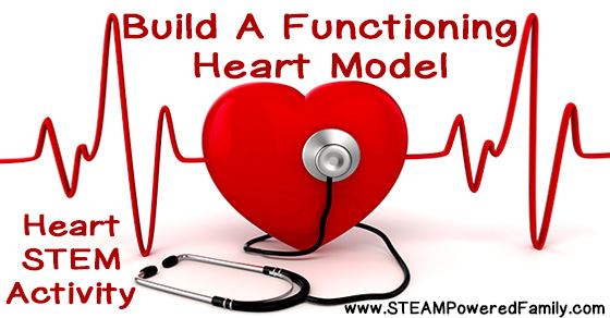 Build A Functioning Heart Model – Heart STEM Activity