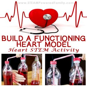 This Heart STEM activity to build a functioning heart model uses all 4 STEM pillars - Science, Technology, Engineering and Math. Kids will spend some time learning about their own heart rates, then how blood flows through the body. For the exciting conclusion engineer and build a functioning model of a beating heart.