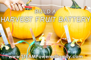 Fall Harvest Fruit Battery Pumpkins and Squash