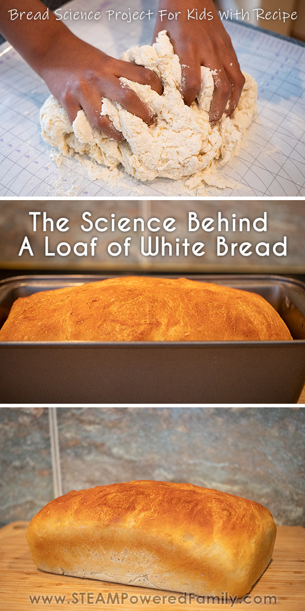 Bread Science project for kids