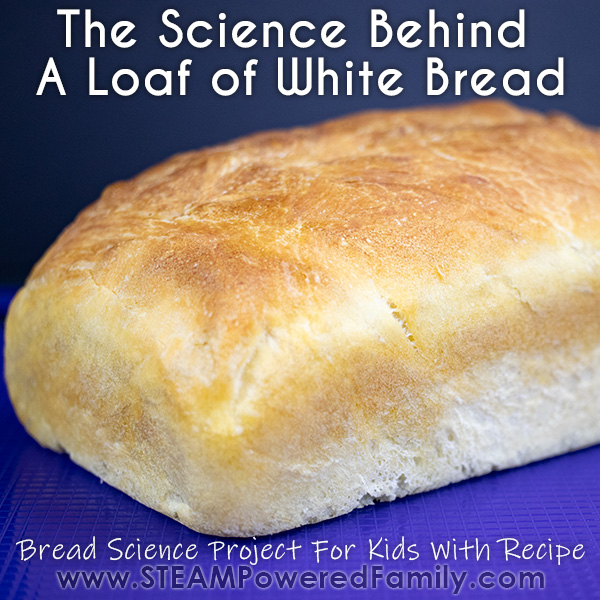 The science behind a loaf of bread