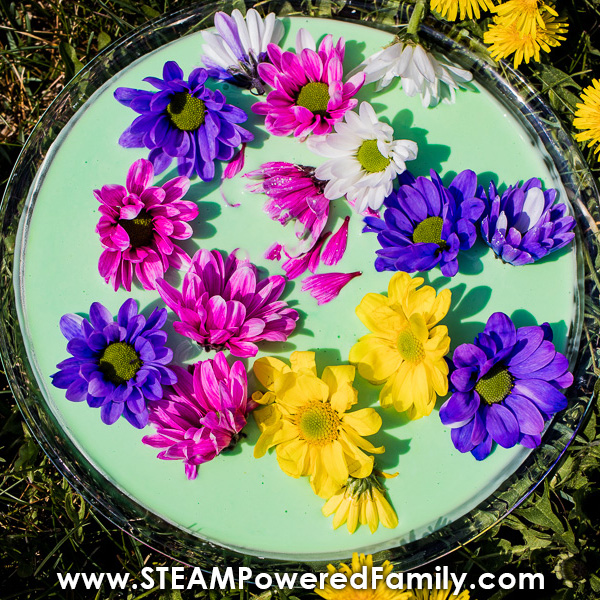 Bowl of green oobleck with fresh flowers