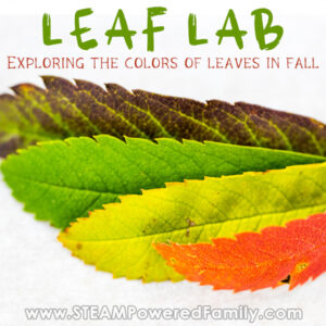 Leaves in an array of fall colours Leaf Lab Exploring Why Leaves Change Colour in the Fall