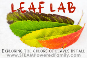 Leaf Lab Fall Science for kids with leaves