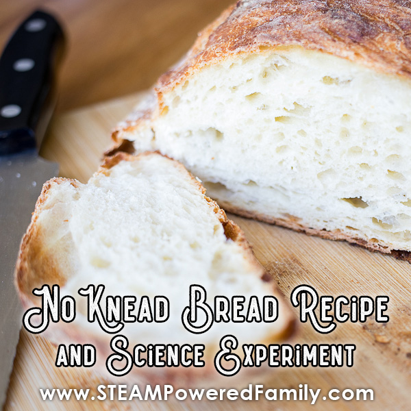 No Knead Bread Science