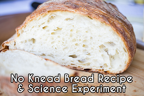No knead bread delicious recipe and science