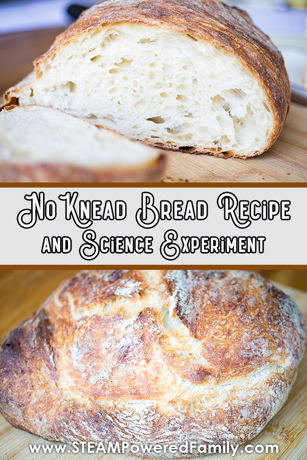 No knead bread recipe and science