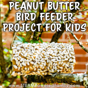 Peanut Butter Bird Feeder Project