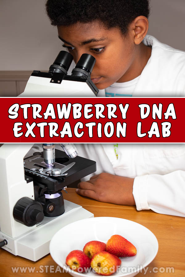 Strawberry DNA Extraction Lab for Kids