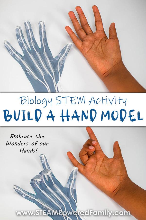 Hand Model STEM Project