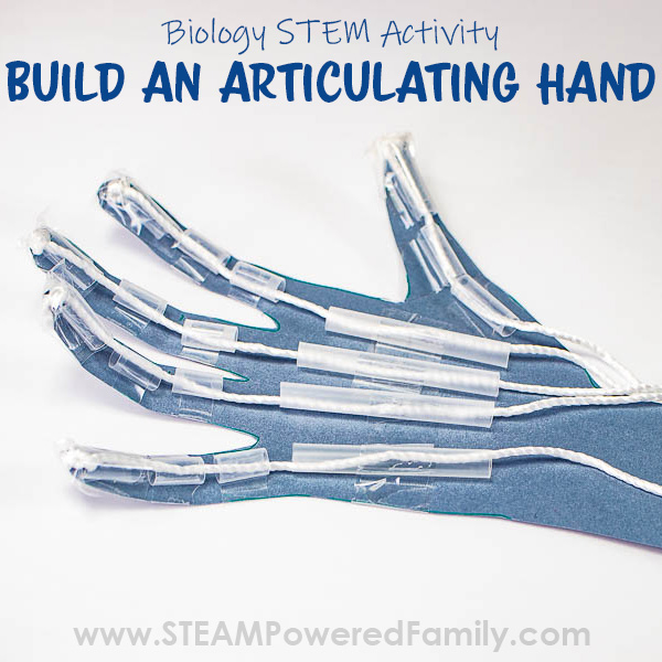 Build a Hand Model