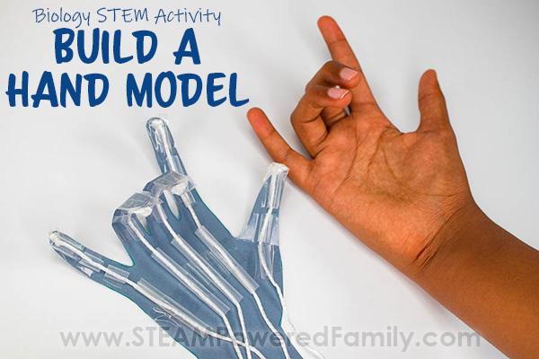 Biology STEM Hand Model Build