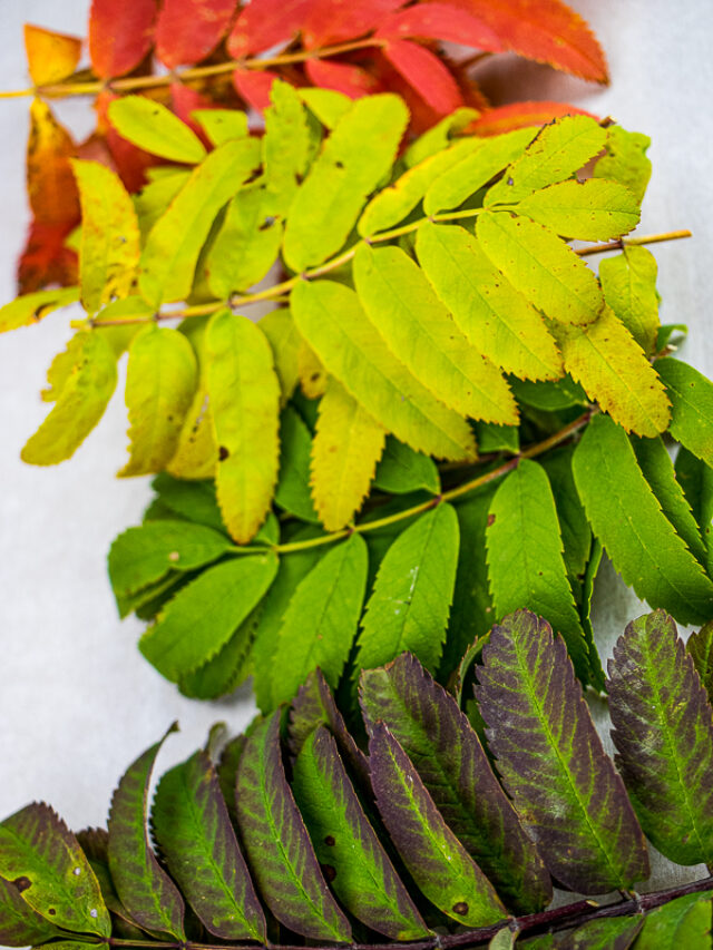 Leaf Lab – Why Do Leaves Change Colour in Fall