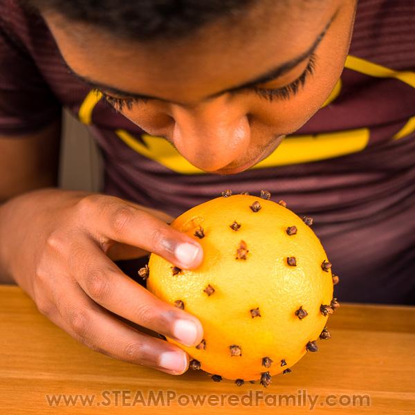 Pomander Orange Clove Sensory Activity